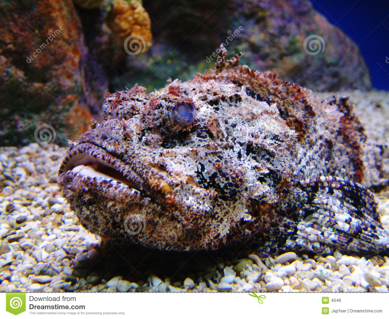 Stonefish Royalty Free Stock Image - Image: 4046