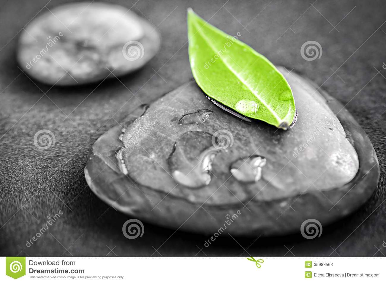 Black and white zen stones submerged in water with color accented green leaf