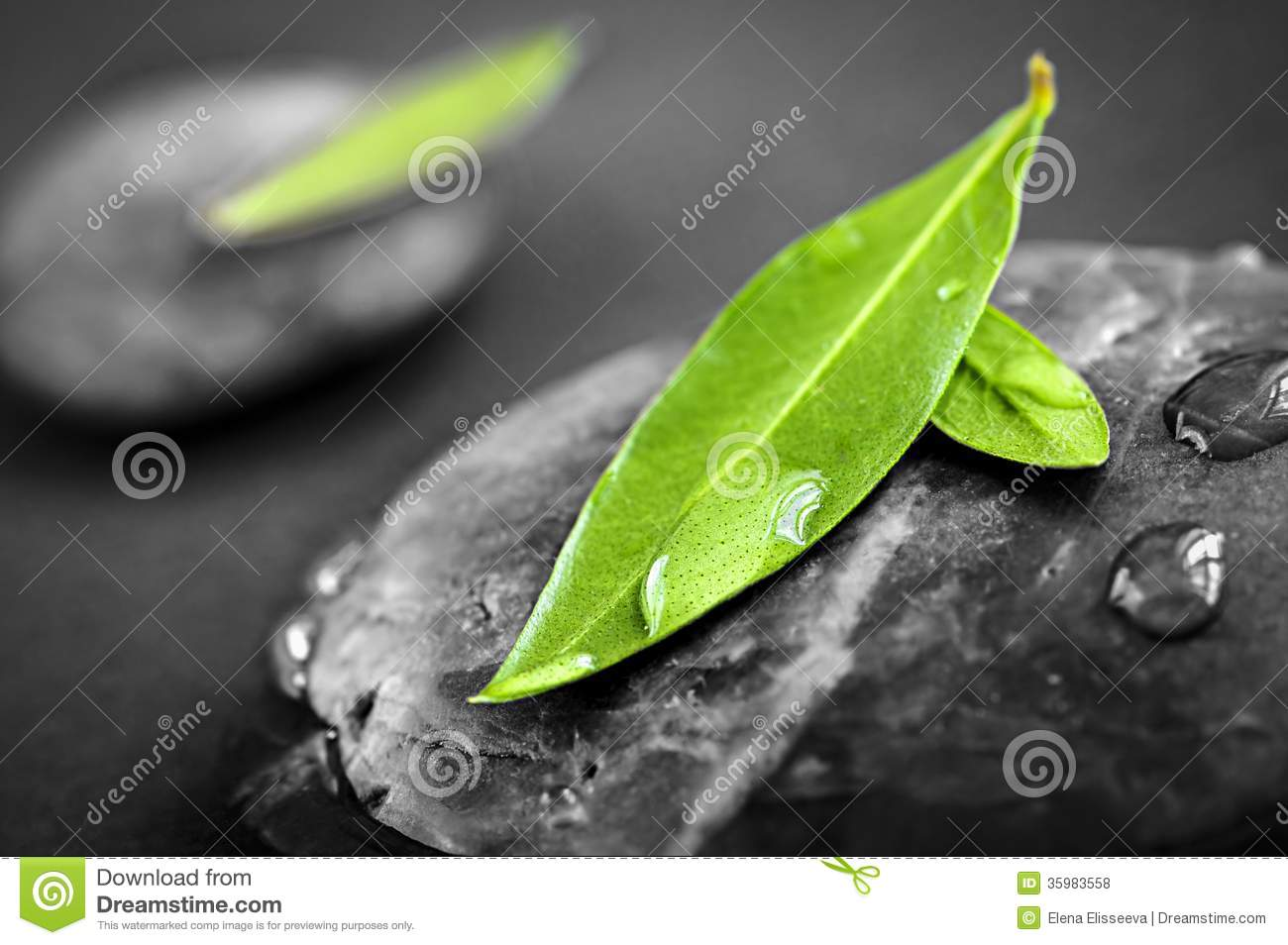 Stones With Green Leaves Stock Photo Image Of Serenity 35983558
