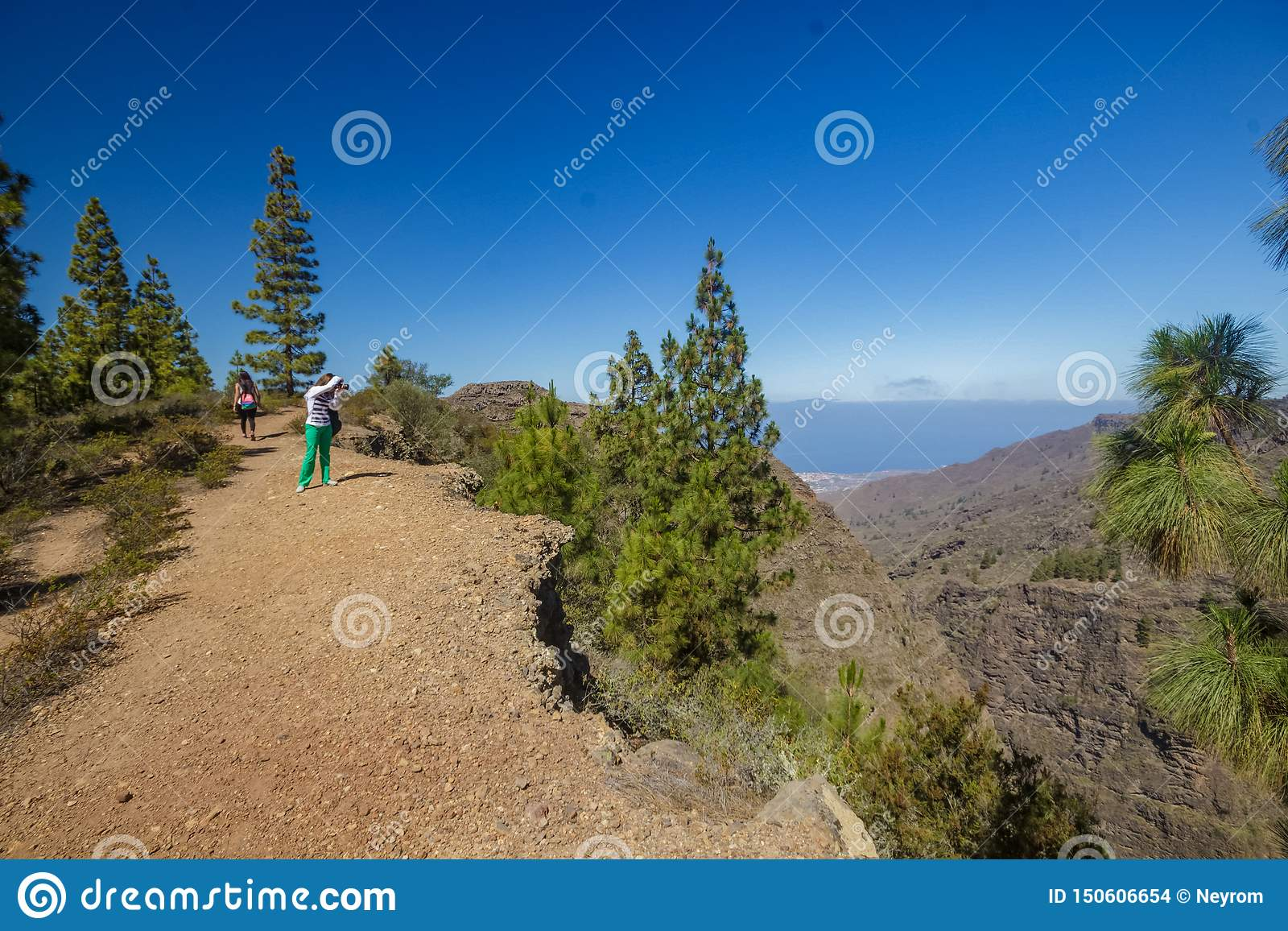 Stony path at upland surrounded by pine trees at sunny day. Clear lue sky and some clouds along the horizon line. Rocky tracking