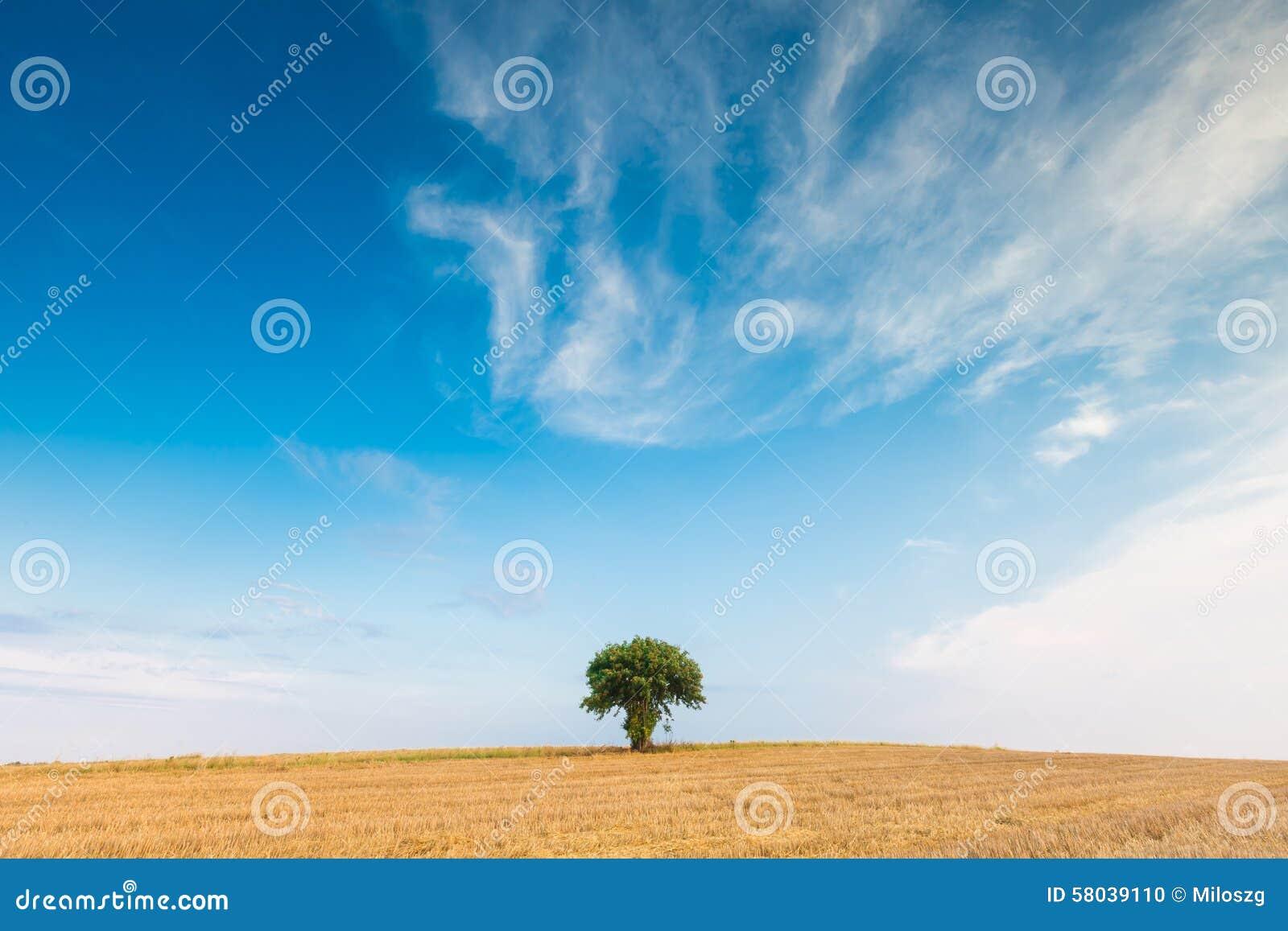 Stoppelfeld mit einzelnem Baum