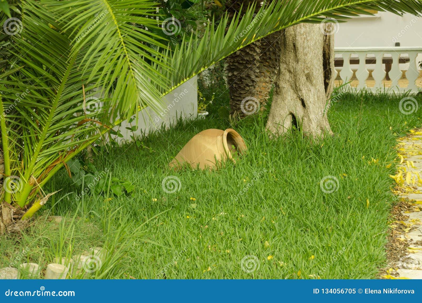 Stor gammal lergodstillbringare på grönt gräs