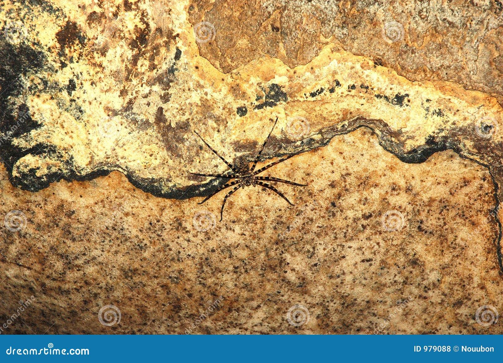 Stor grotta inom den giftiga spindelsuratthanien thailand för khamin