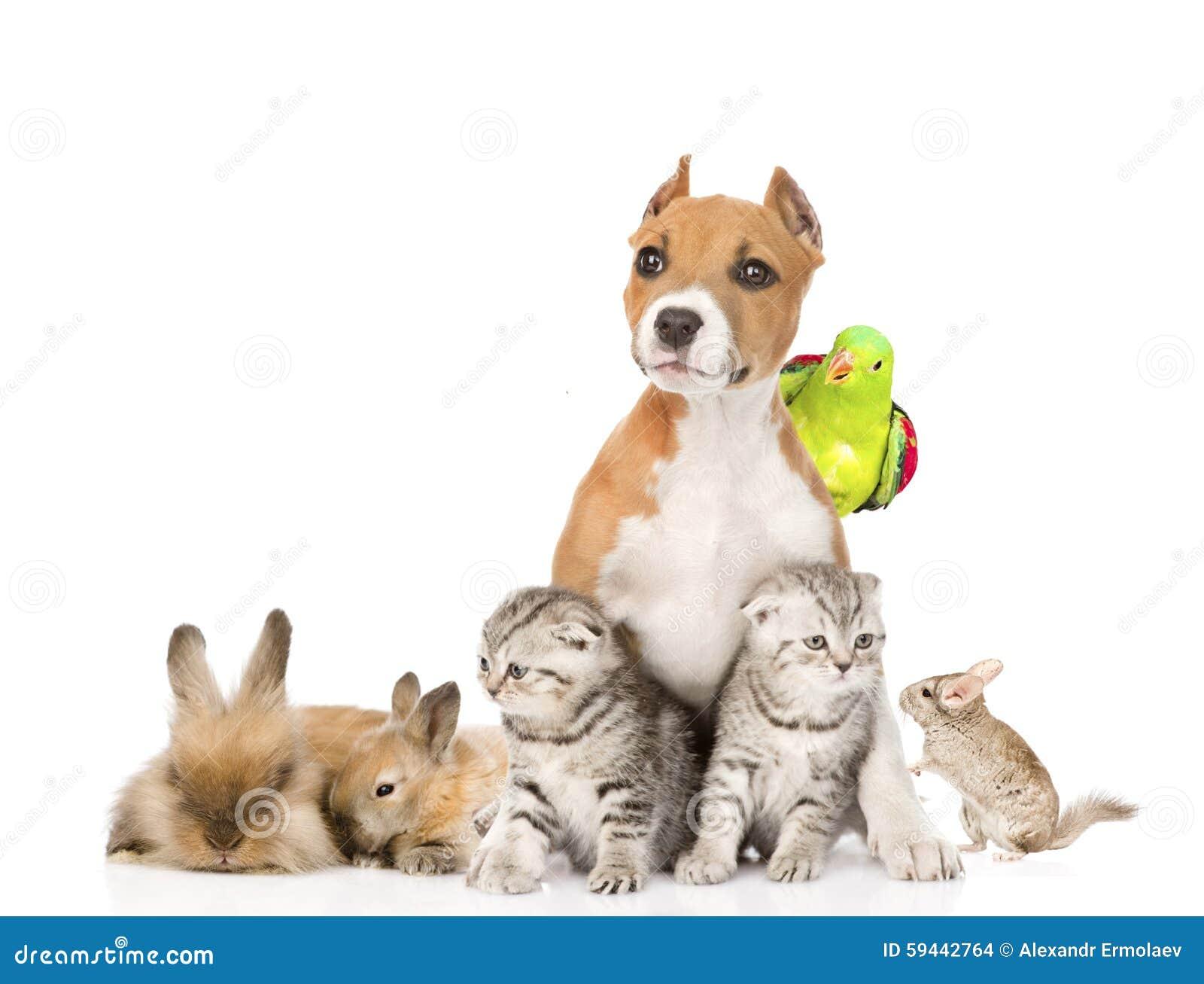 Stor grupp av husdjur tillsammans framme Isolerat på vit