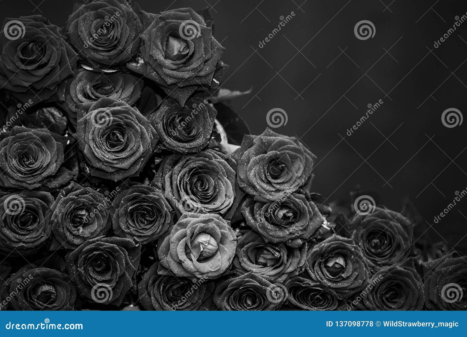 Stor grupp av röda rosor, svartvitt foto