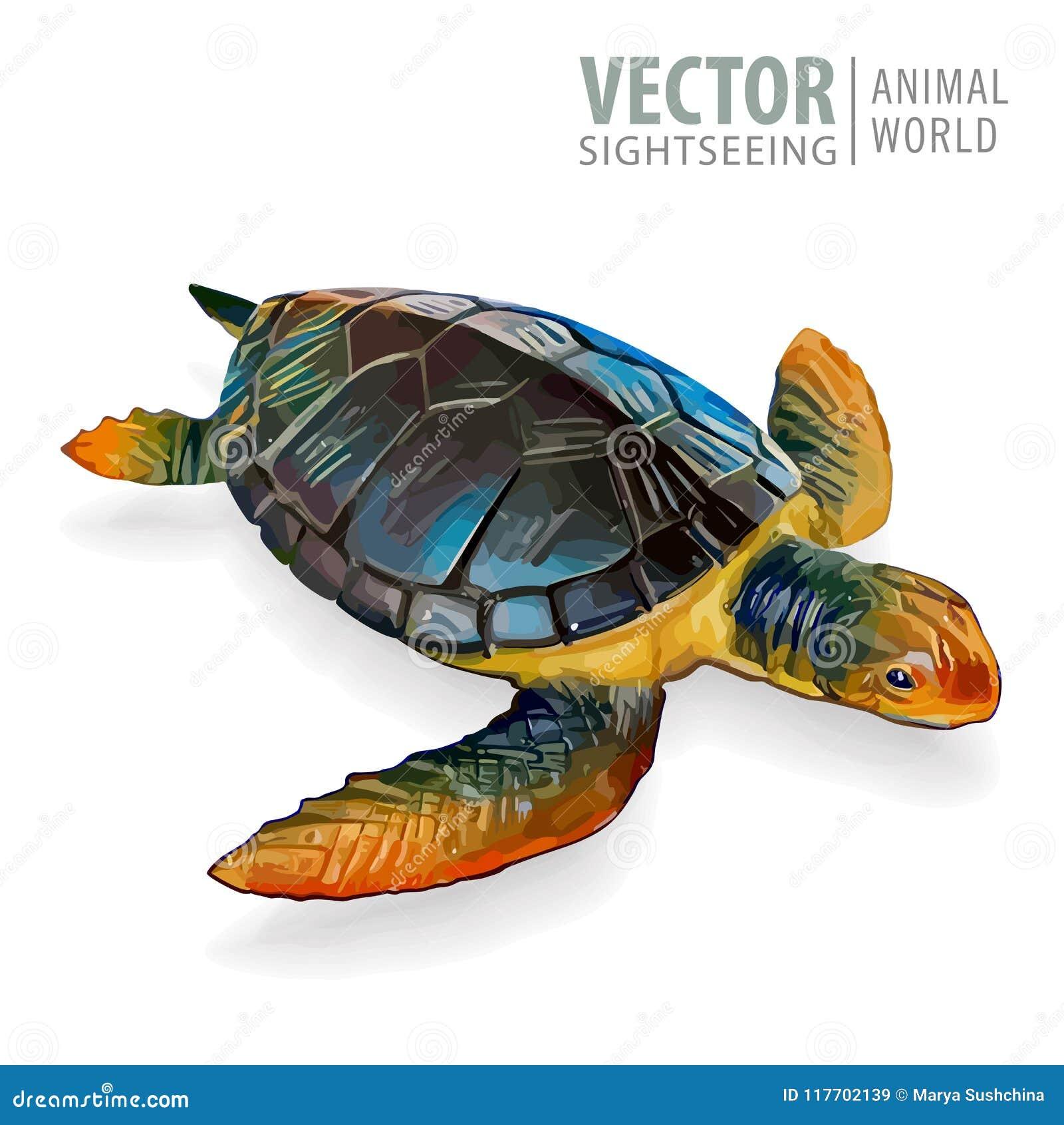 Stor havssköldpadda också vektor för coreldrawillustration Sköldpadda som isoleras på vit bakgrund