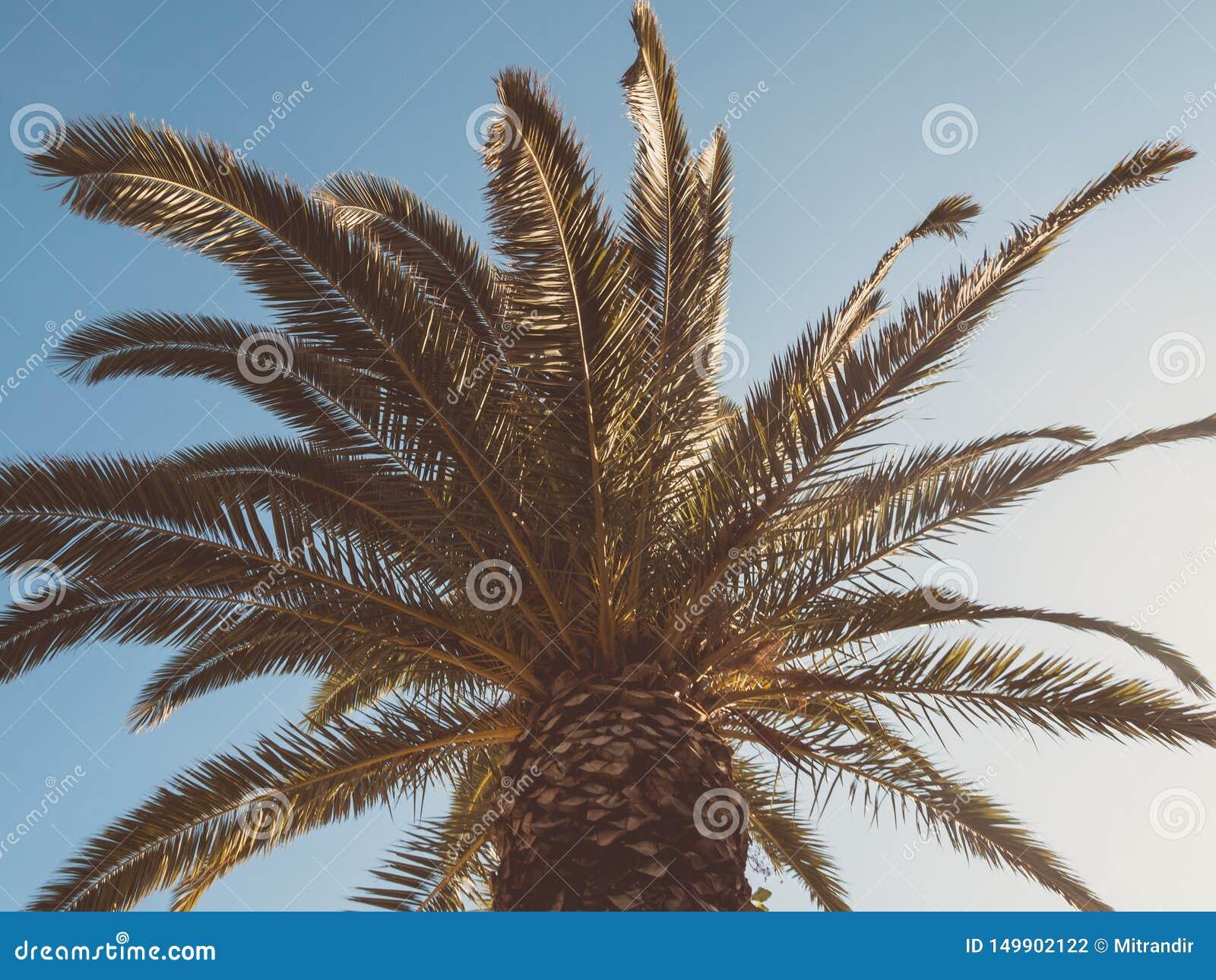 Stor markis av en palmträd som underifrån ses