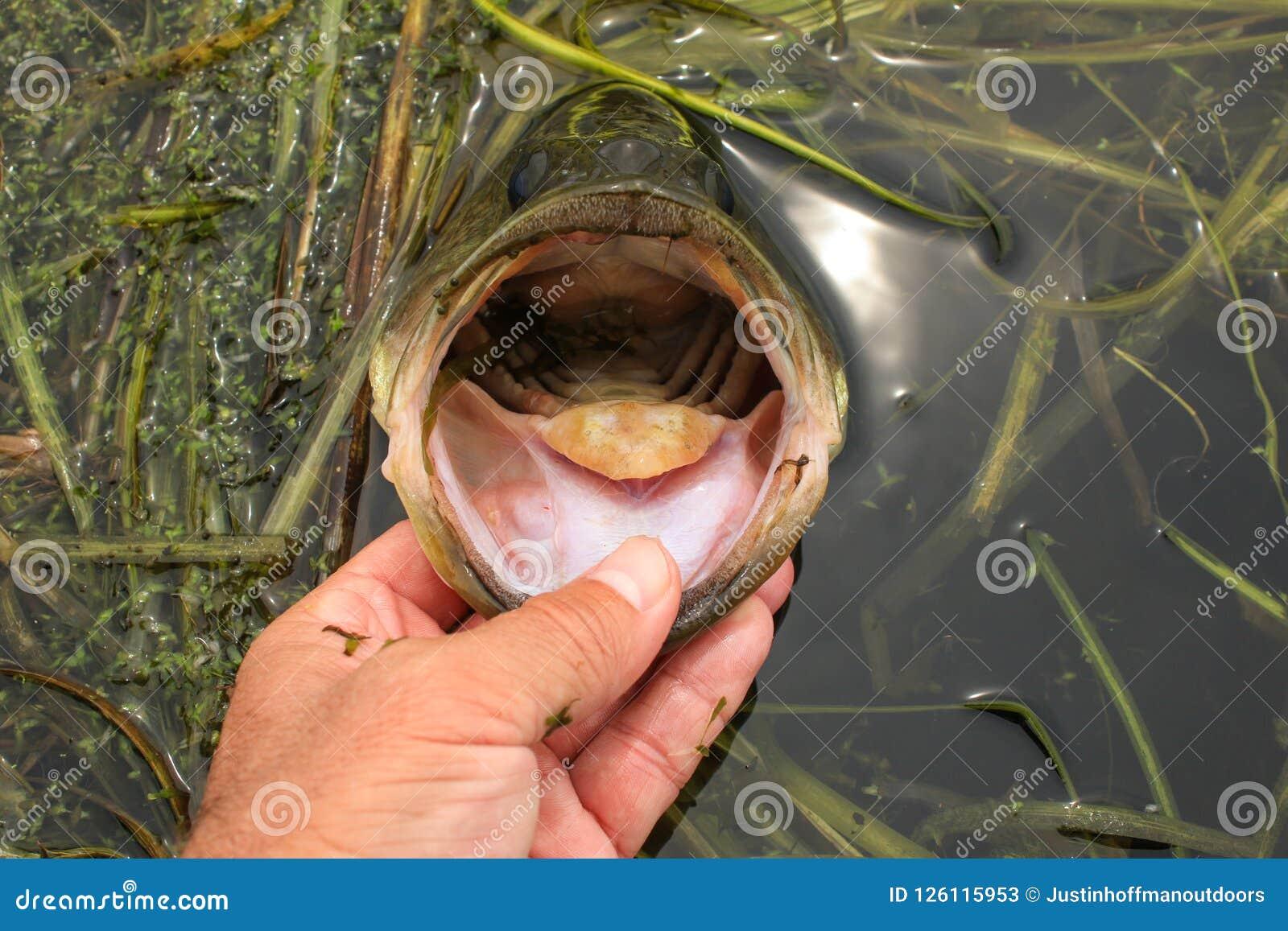 Stor mun Bass While Fishing för mankanter