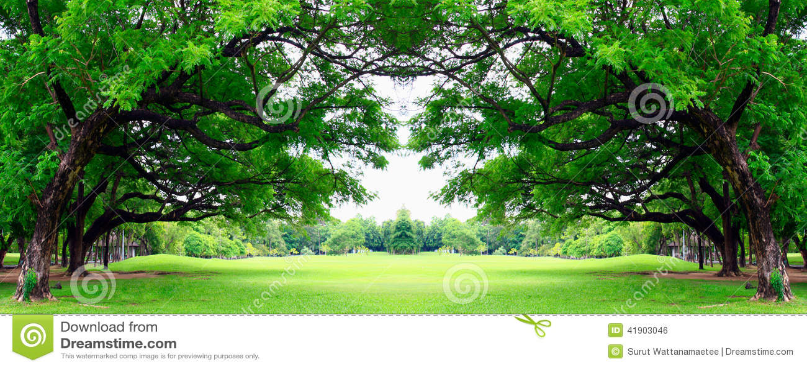 Stor tree