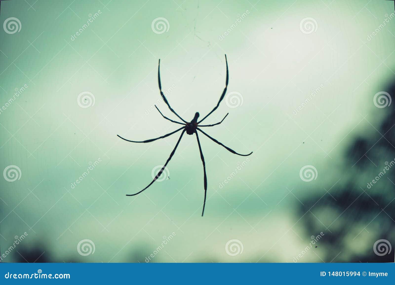 Stor tropisk spindel - guld- orb f?r Nephila pilipes i reng?ringsduken
