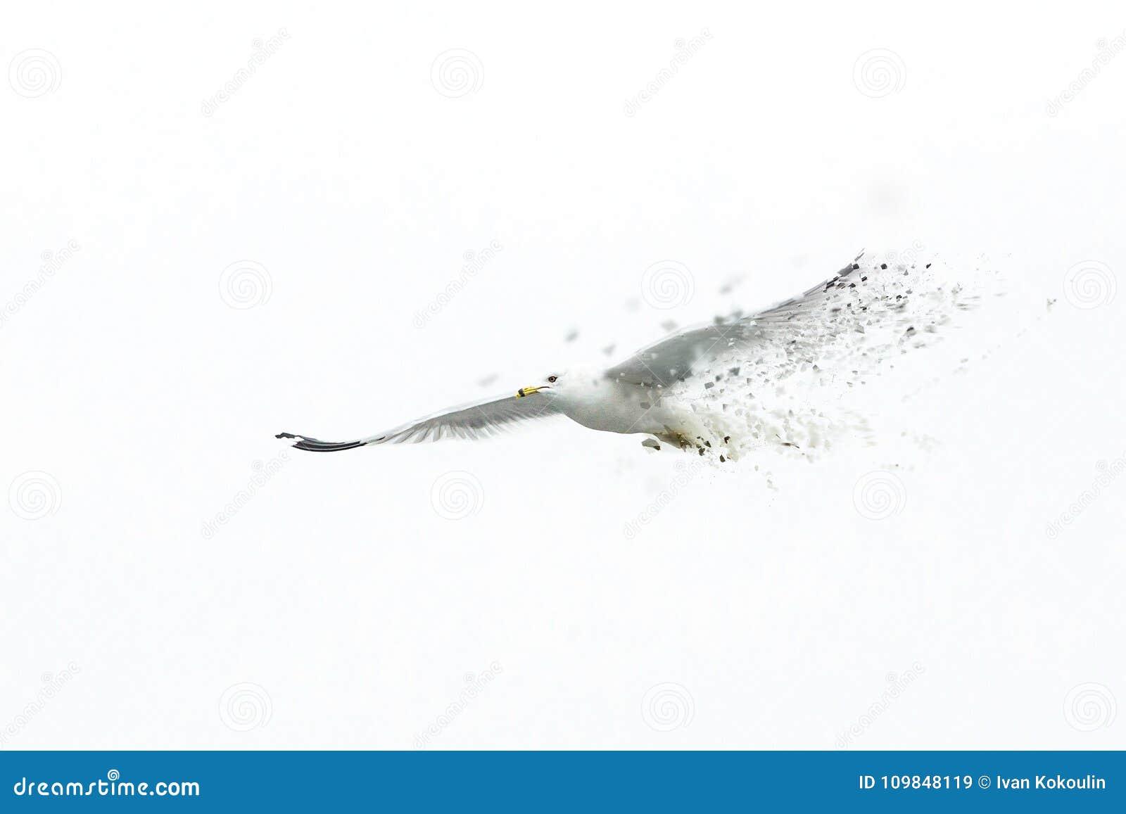 Stor vit seagull som flyger solo bara att försvinna
