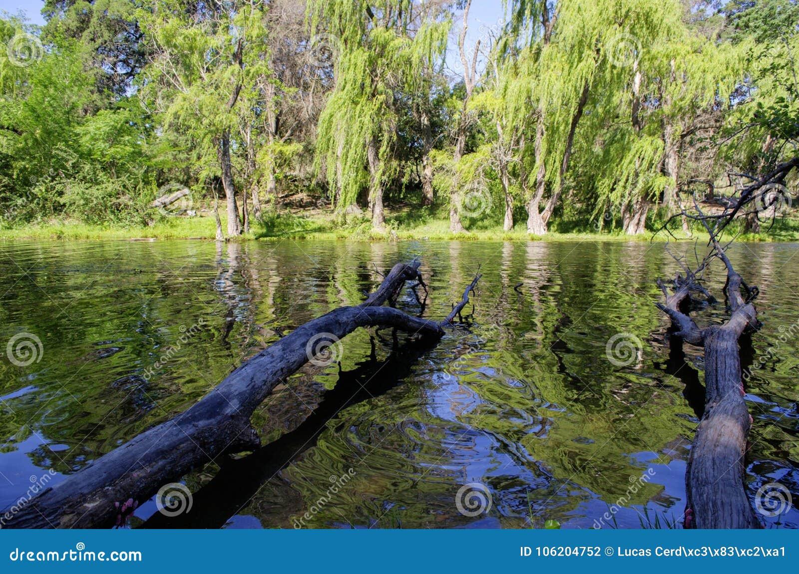 Stora filialer och en blured skogreflexion på sjön