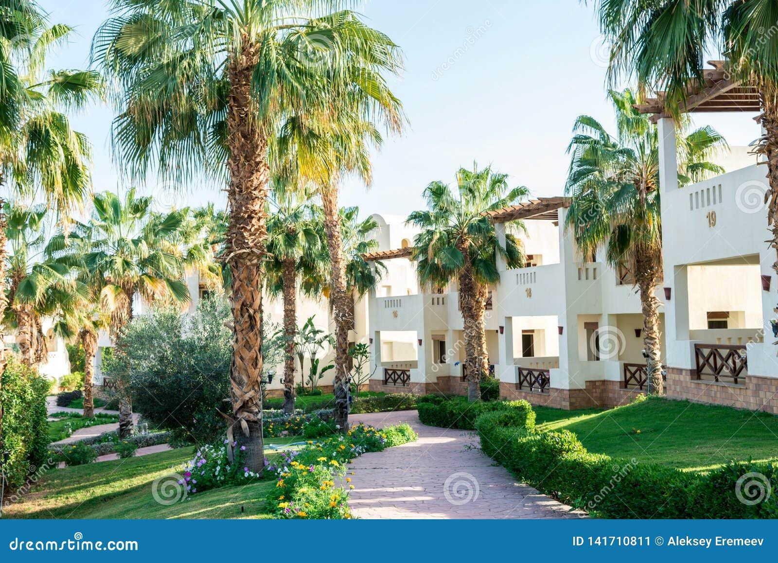 Stora gröna palmträd på lokalen av hotellet