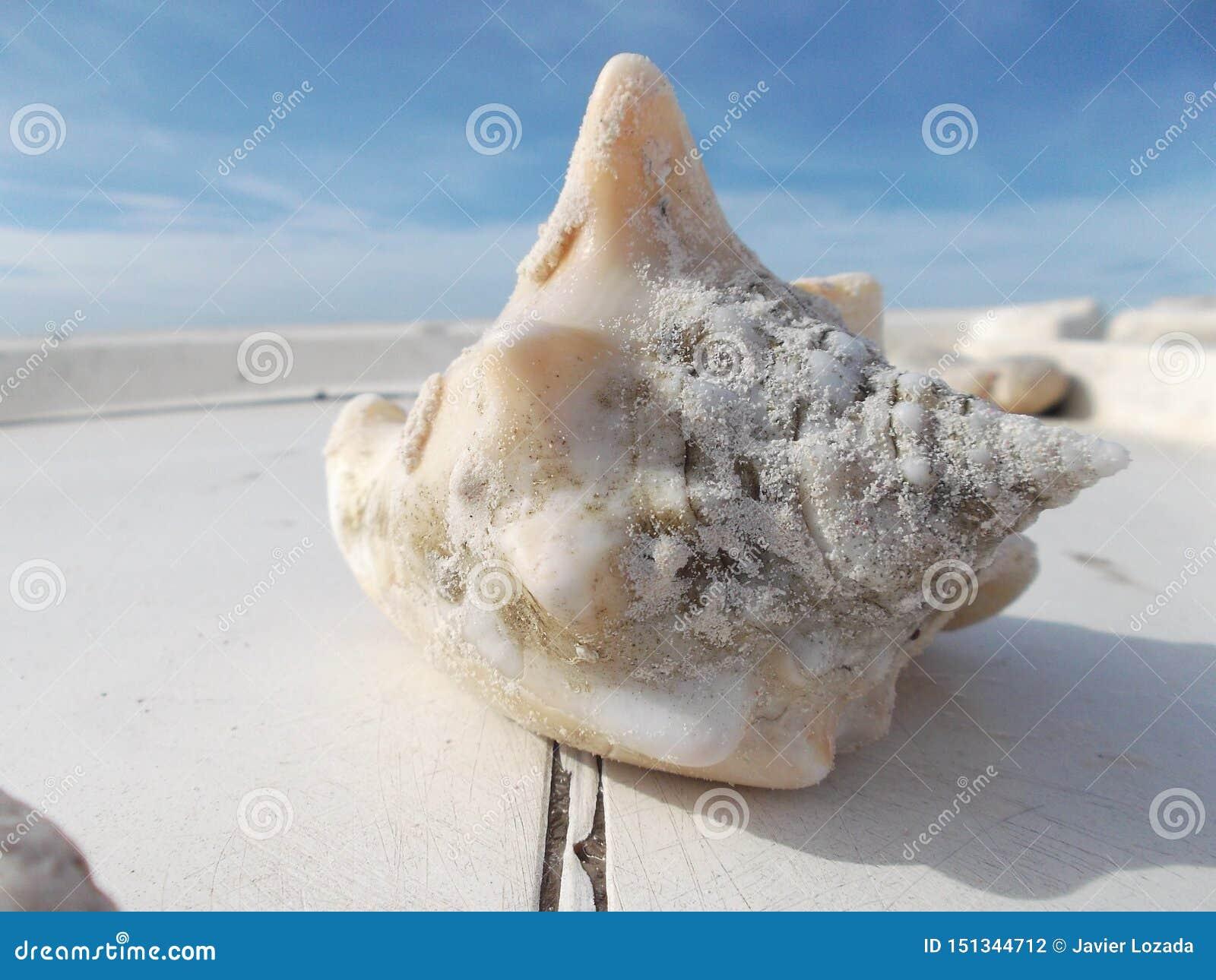 Stora skal p? skeppsdockan framme av stranden