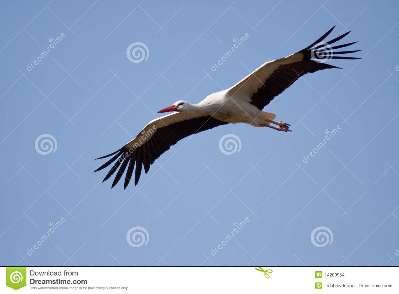 storch methode