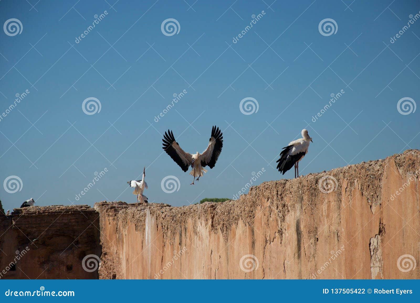 Storch im Flug und Störche auf Wand