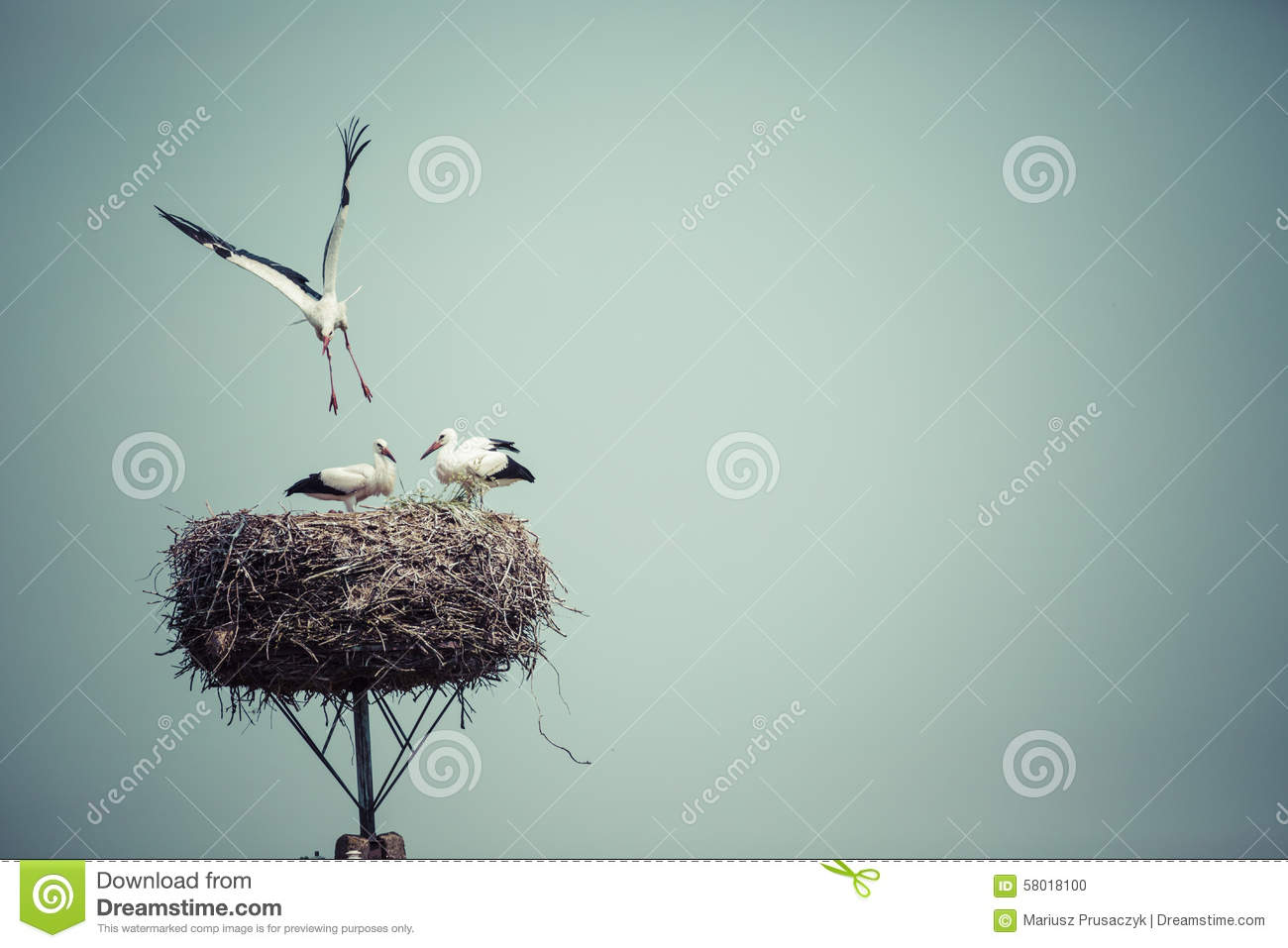 storch mit vogelbabys im nest polen stockfoto bild von karosserie erwachsener 58018100. Black Bedroom Furniture Sets. Home Design Ideas