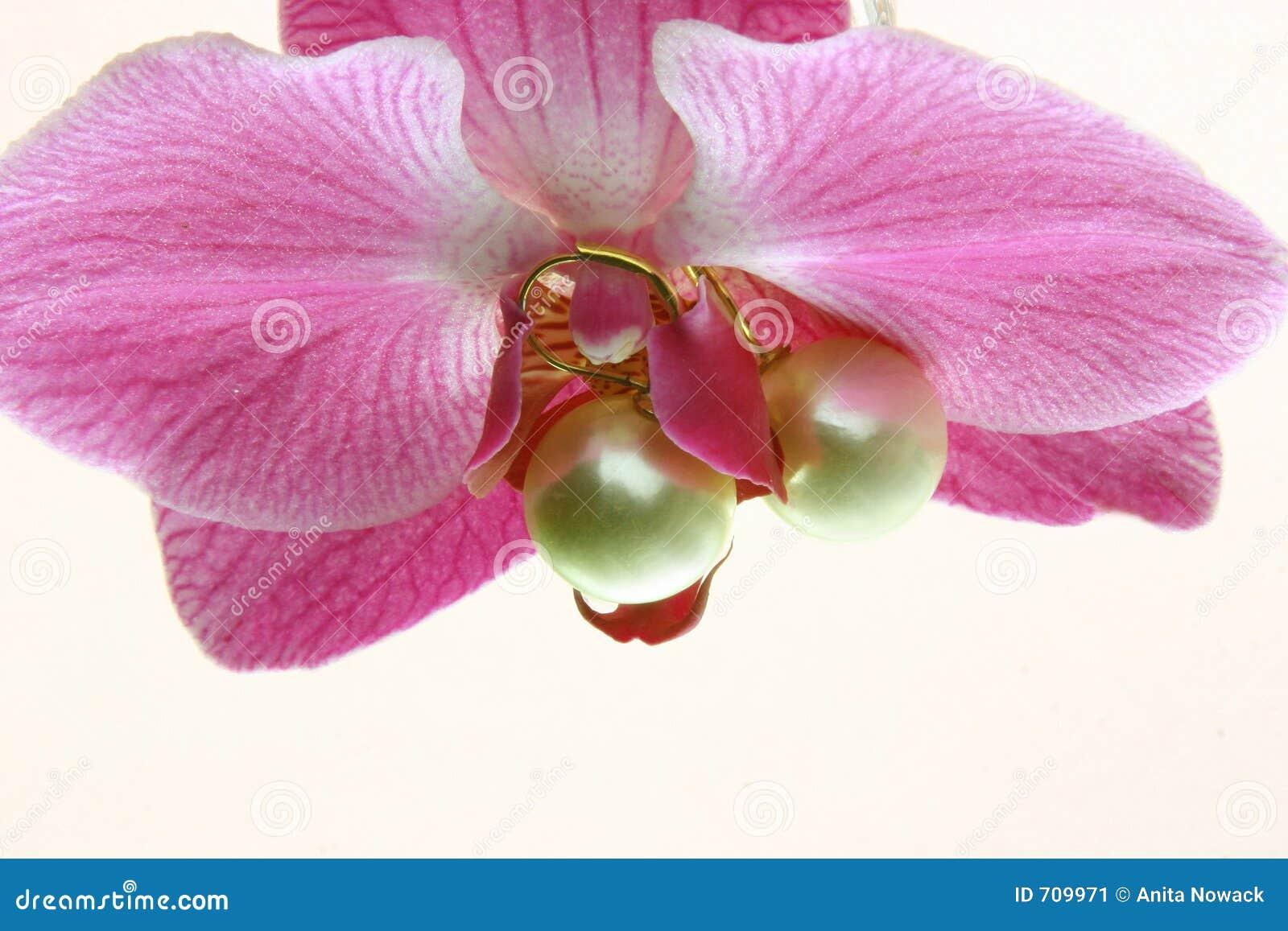 Storczykowe perły?