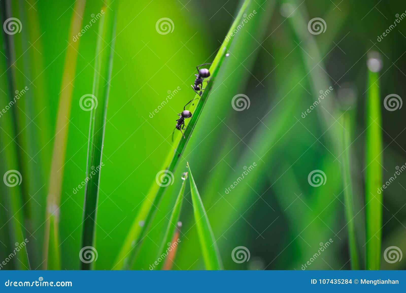 Storia delle formiche