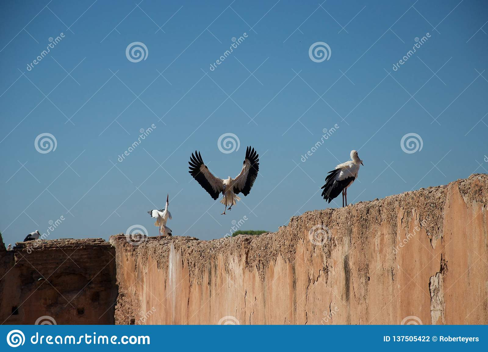 Stork in flight and storks on wall