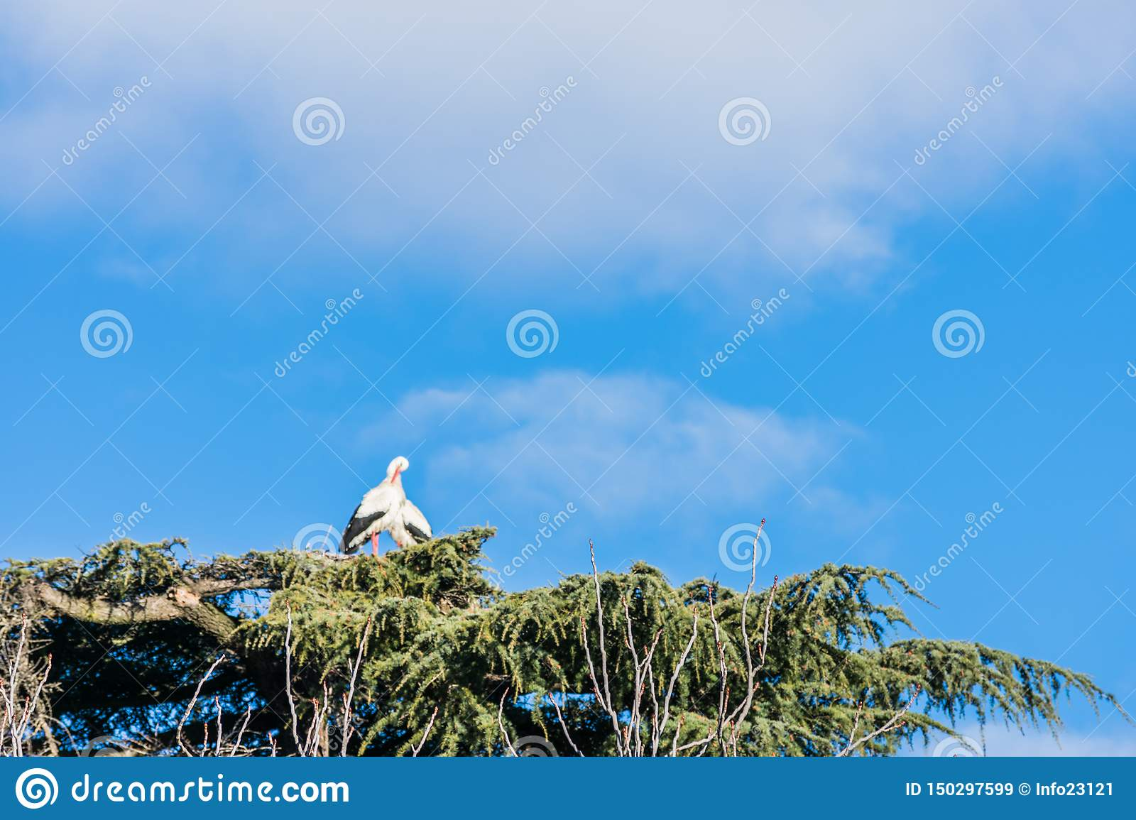 Stork in its nest on a tree