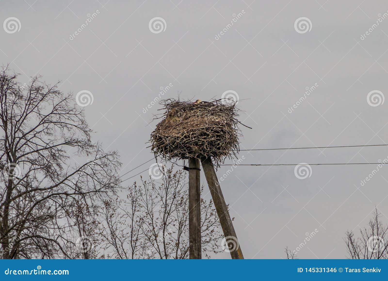 Stork nest on electric pole