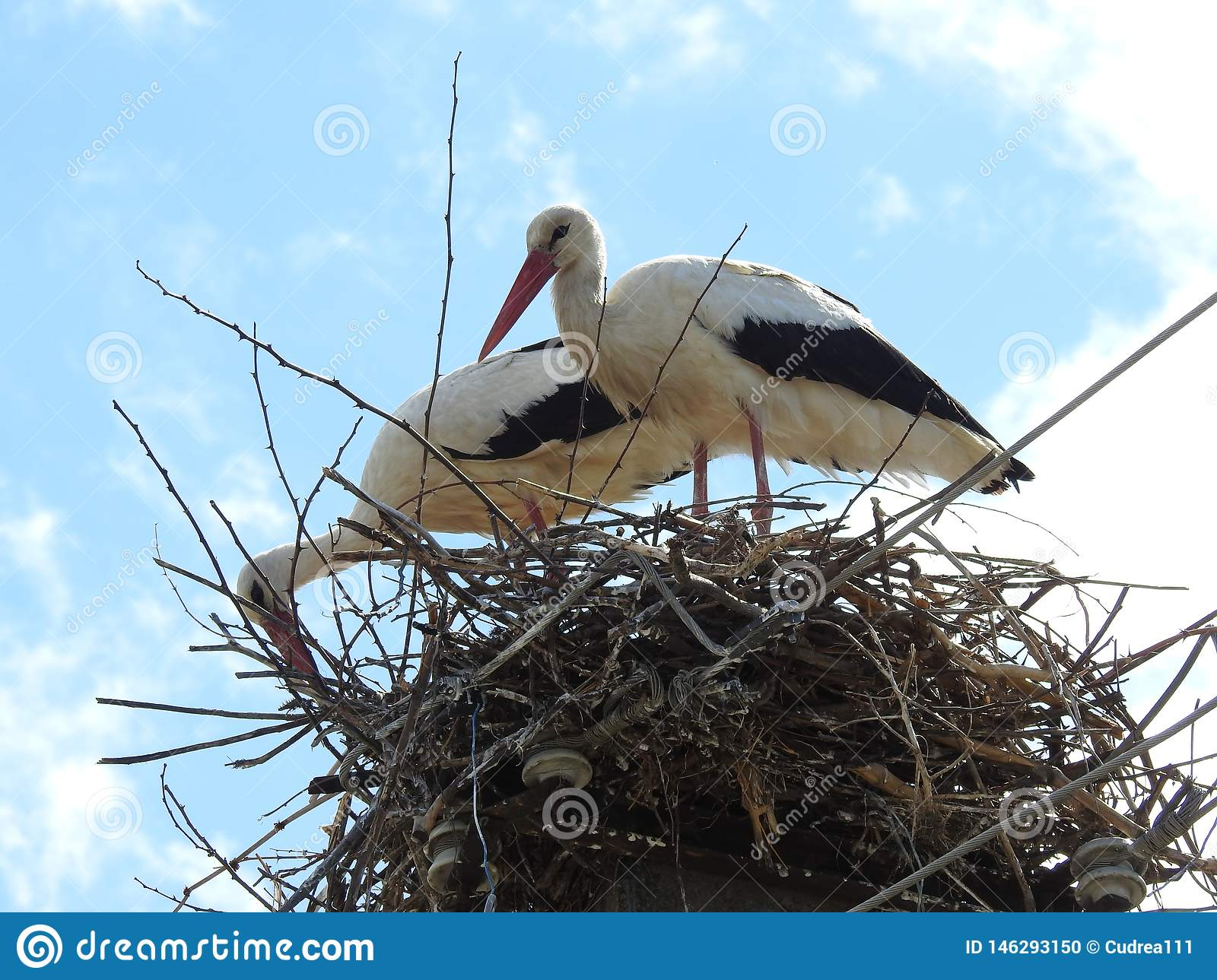 The storks constituting the nest.