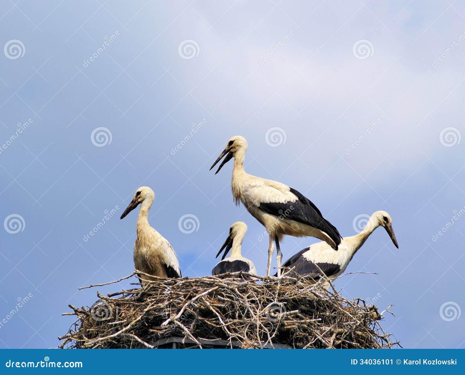 storks in the nest poland stock image image 34036101. Black Bedroom Furniture Sets. Home Design Ideas