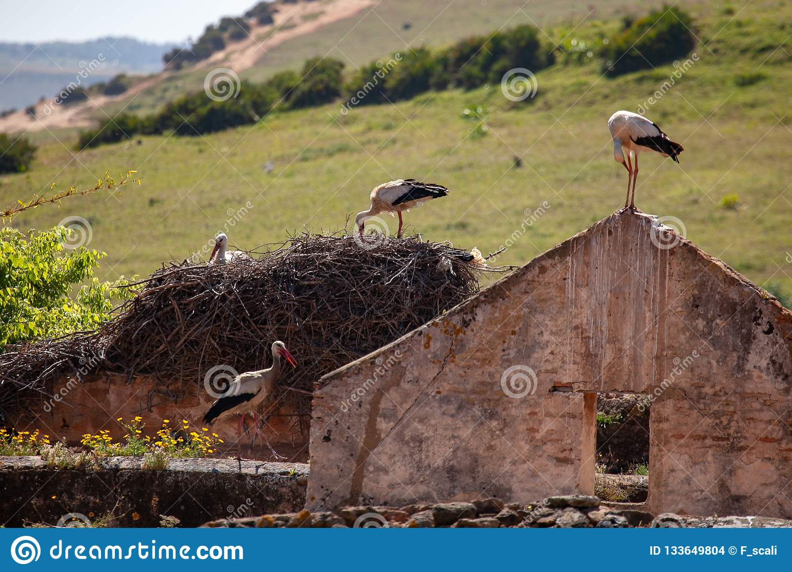 Storks nesting on ruined house in Morocco