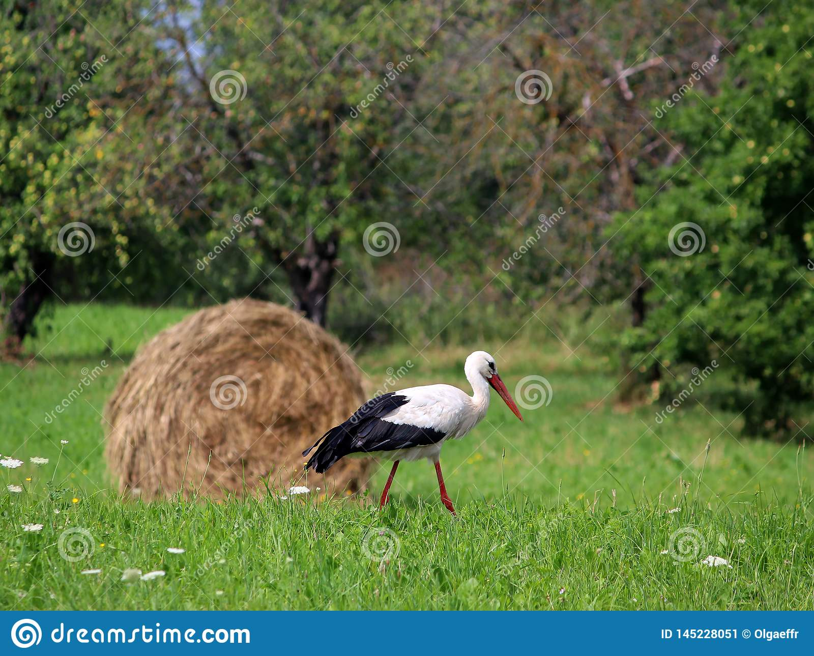 A stork and a haystack. Village. Daylight. Summer photography.
