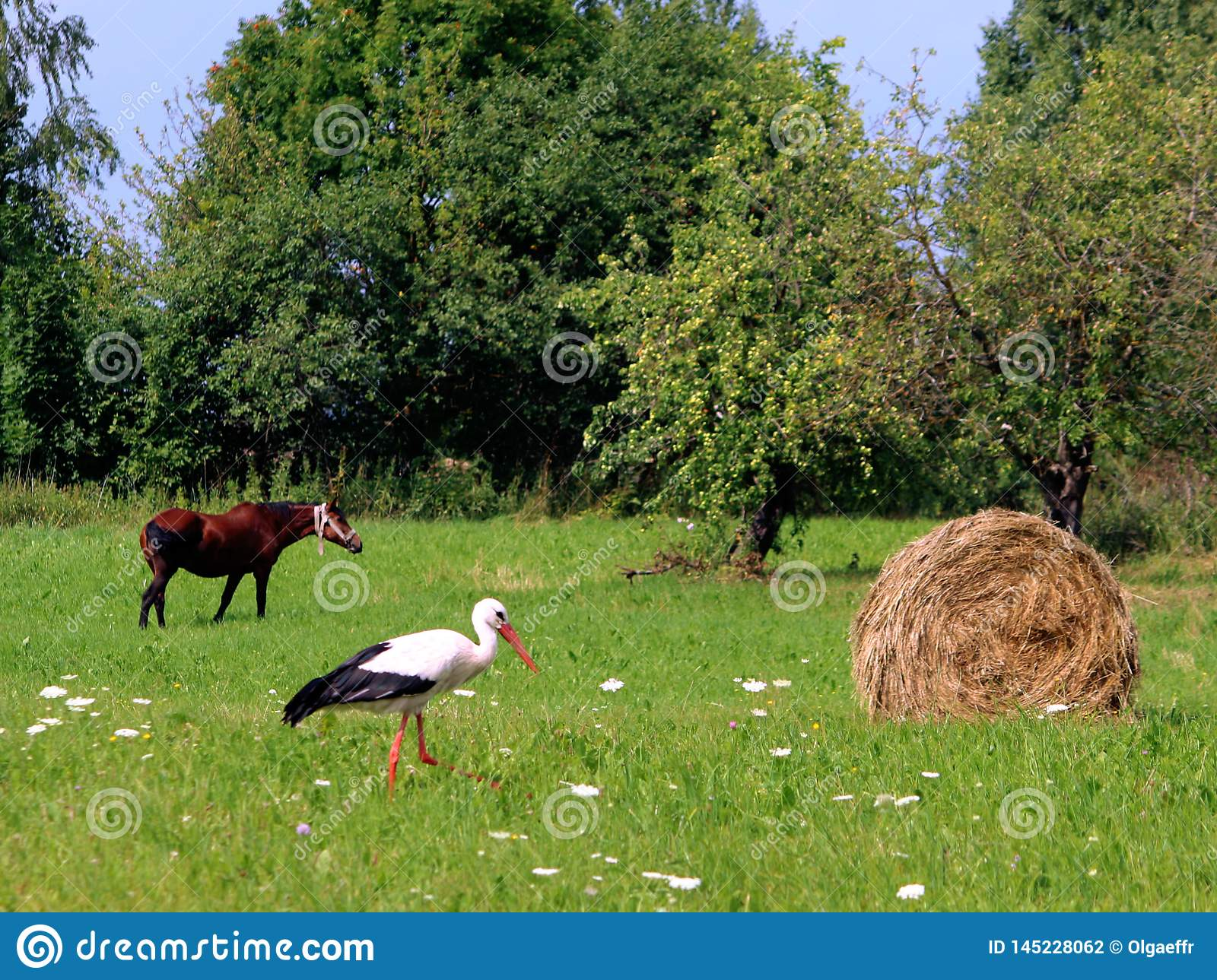 A storks and a haystack. Village. Daylight. Summer photography.