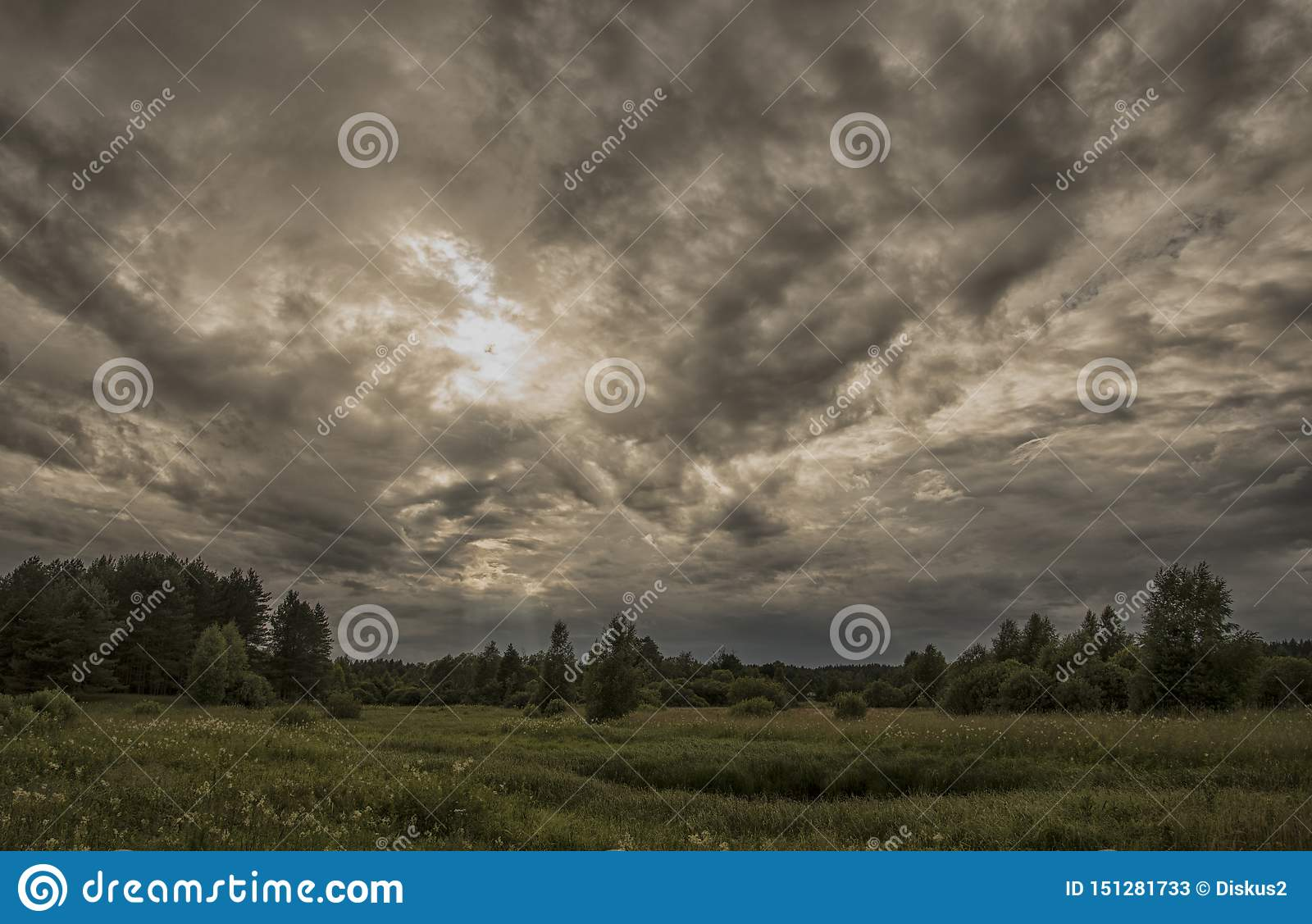 Storm over the forest