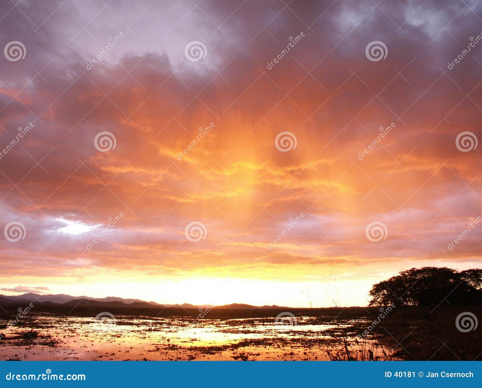 Stormachtige hemel boven moeras