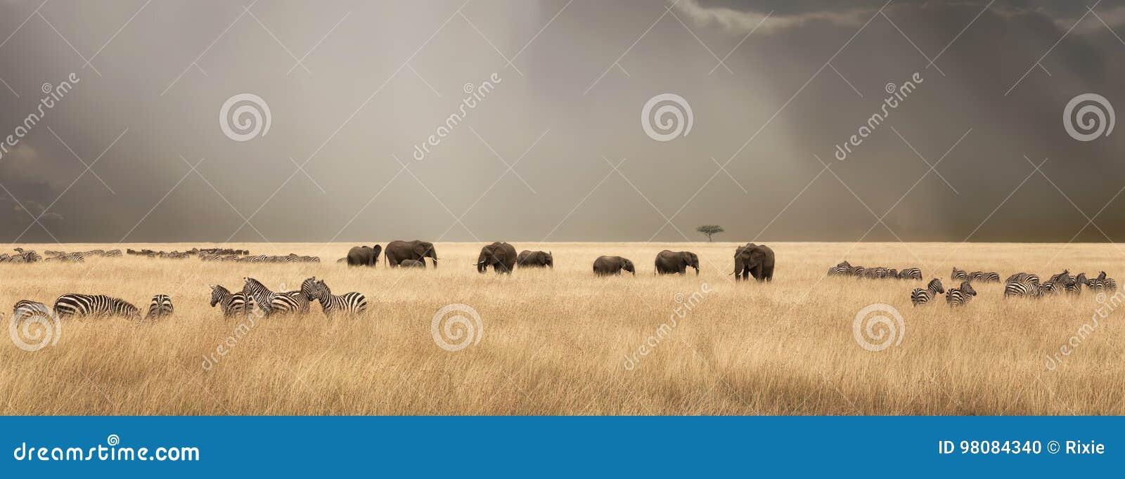 Stormachtige hemel over masai Mara met olifanten en zebras