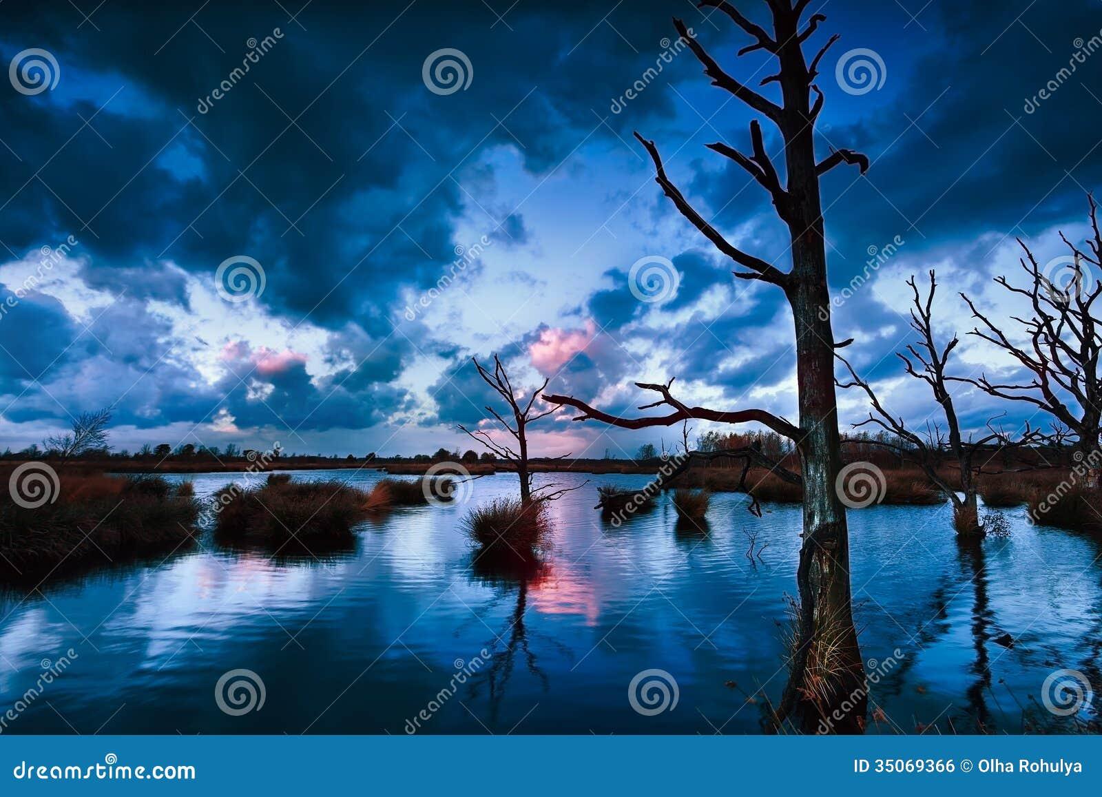 Stormig solnedgång över myren med döda träd