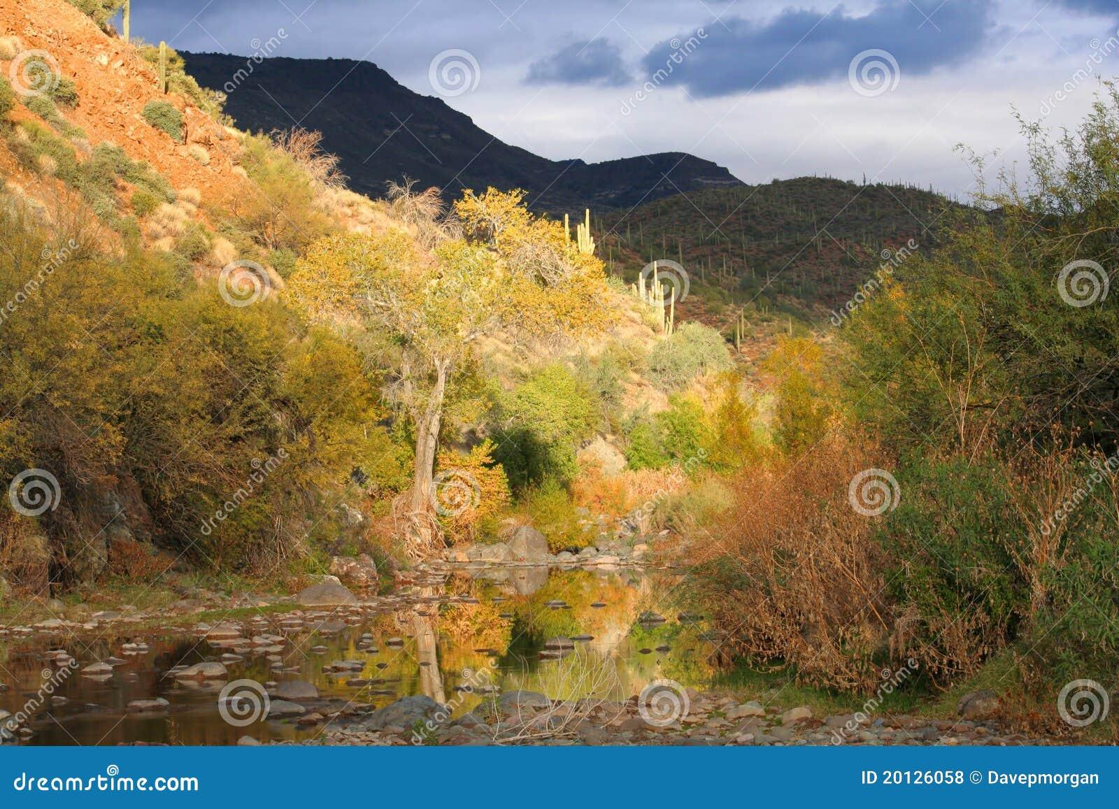 Stormy Creekside Desert Scene