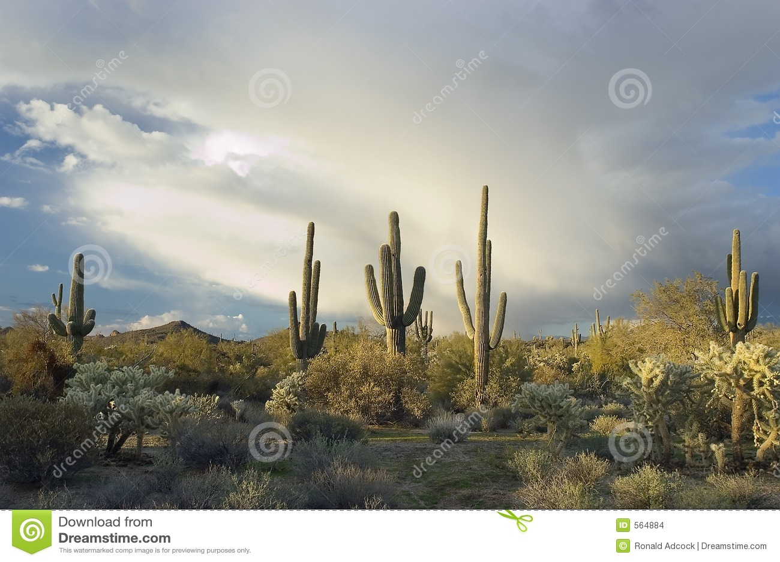 Stormy Sonoran Desert, Arizona
