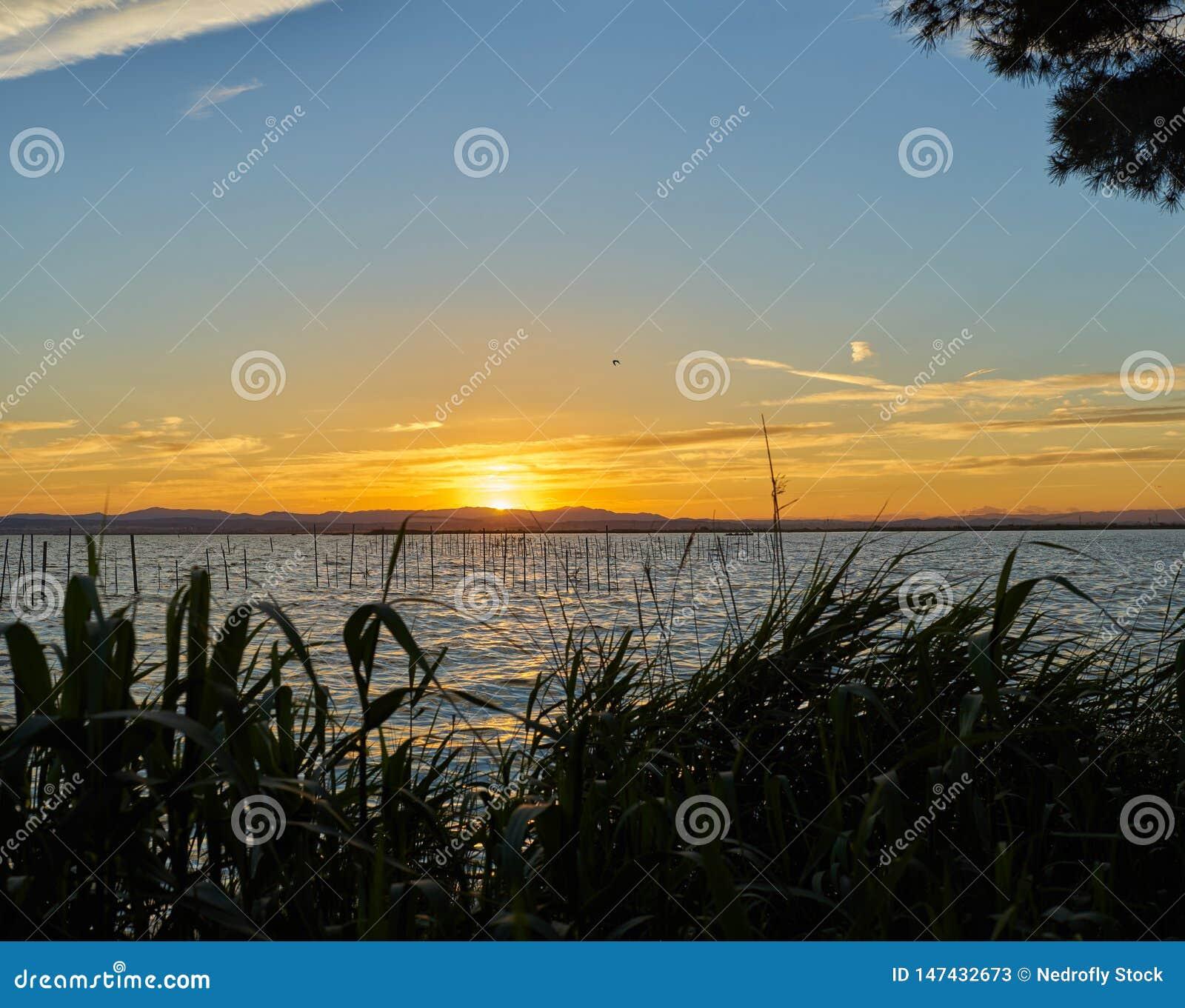 Stort format i panorama- solnedgång för hög upplösning i Albuferaen av Valencia spain
