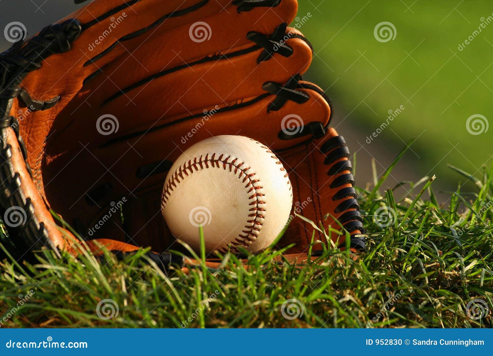 Stort modigt handskegräs för baseball