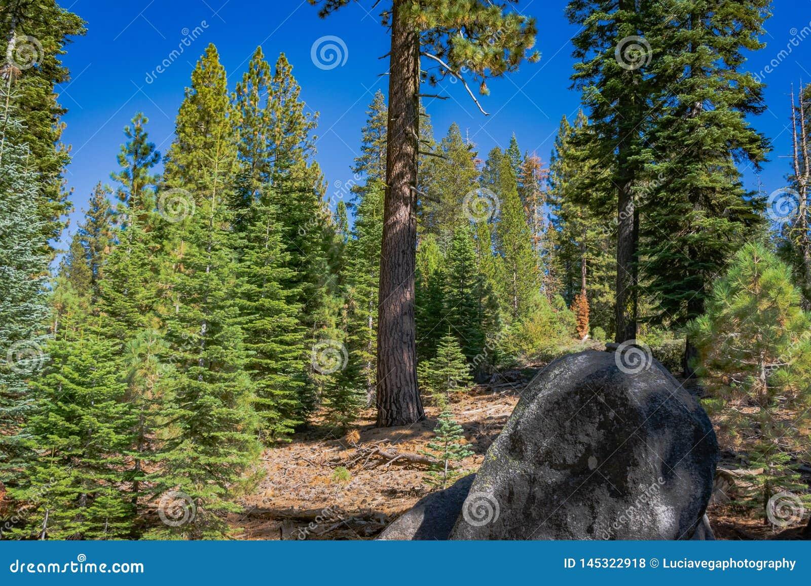 Stort vagga och s?rjer i Yosemite