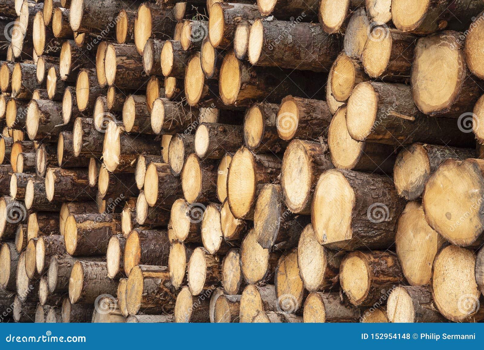 Stos niedawno ciący szalunku drewno
