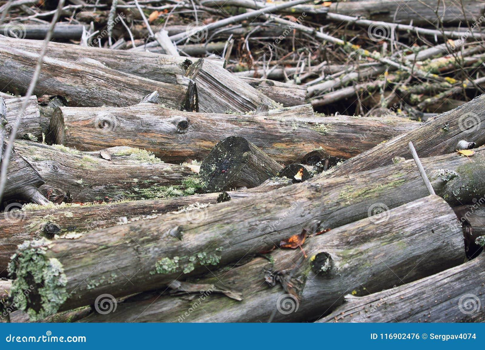 Stos susi drzewni bagażniki, cięcie puszek dla łupki