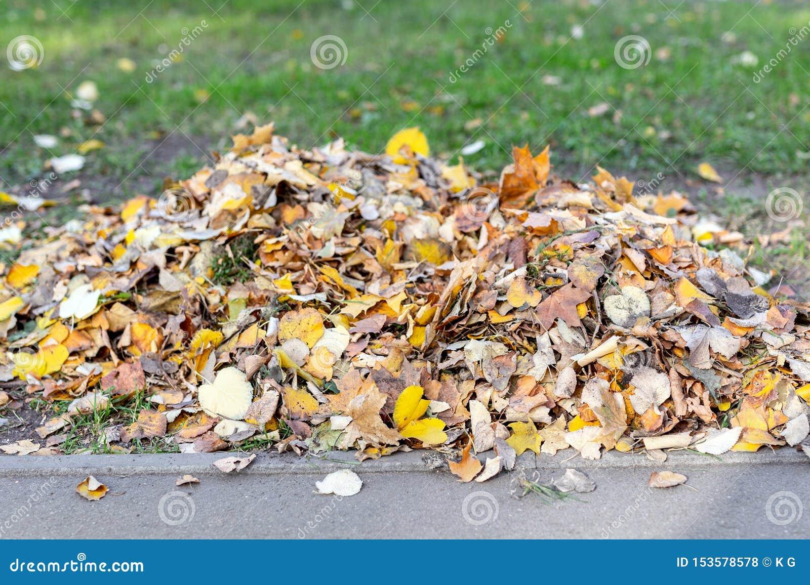 Stos złoci barwioni spadać liście na zielonej trawie przy podwórko lub miasta parkiem w jesieni Sezon jesienny t?o
