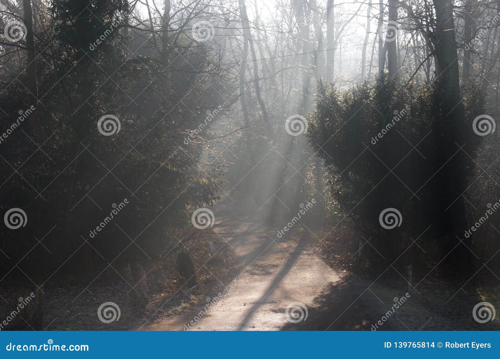 Strålar av ljus på ett vägspår till och med skogsmarkskog: solljus som filtrerar till och med kala vinterträd och mist