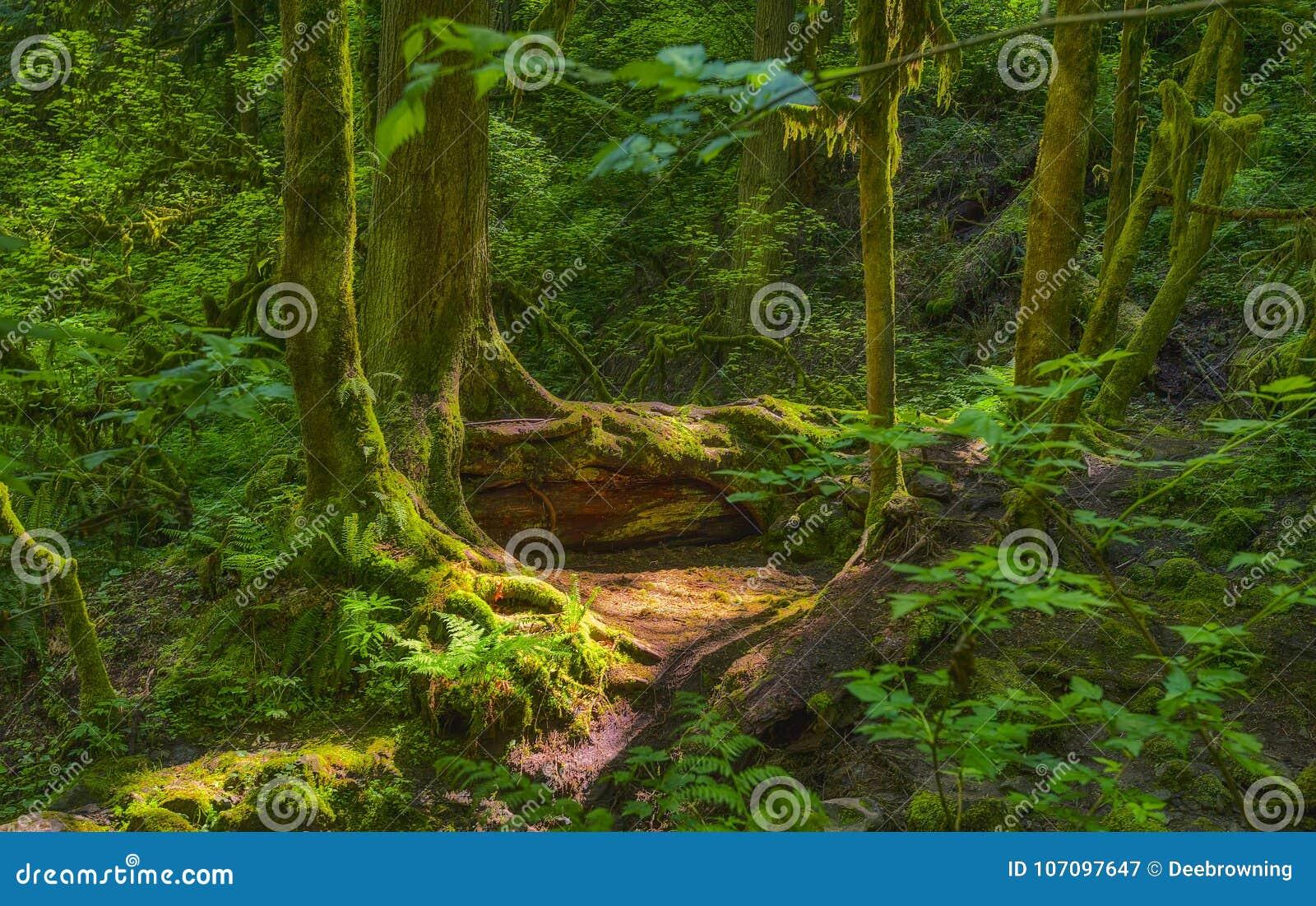 Strålar för sol` s gör ljusare den skuggiga skogsbevuxna smaragdskogen