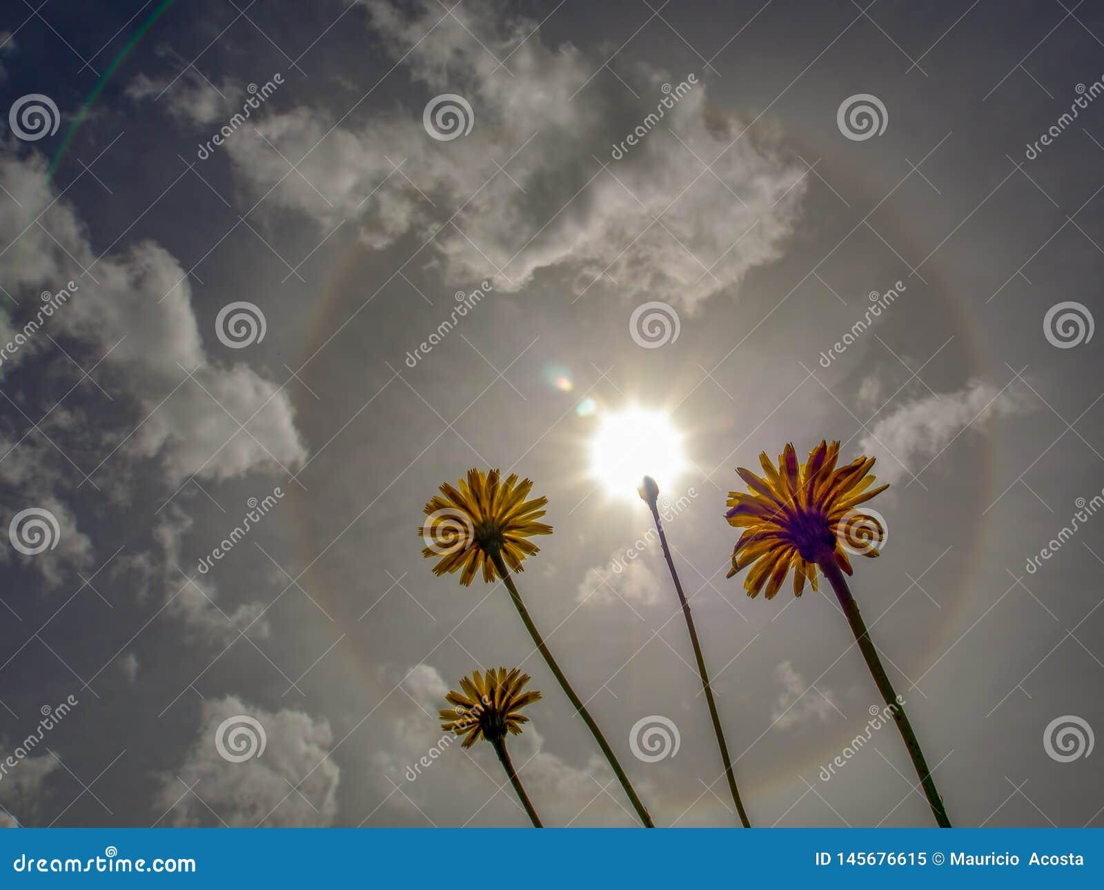 Strålkastare för en sol- gloria i morgonhimlen