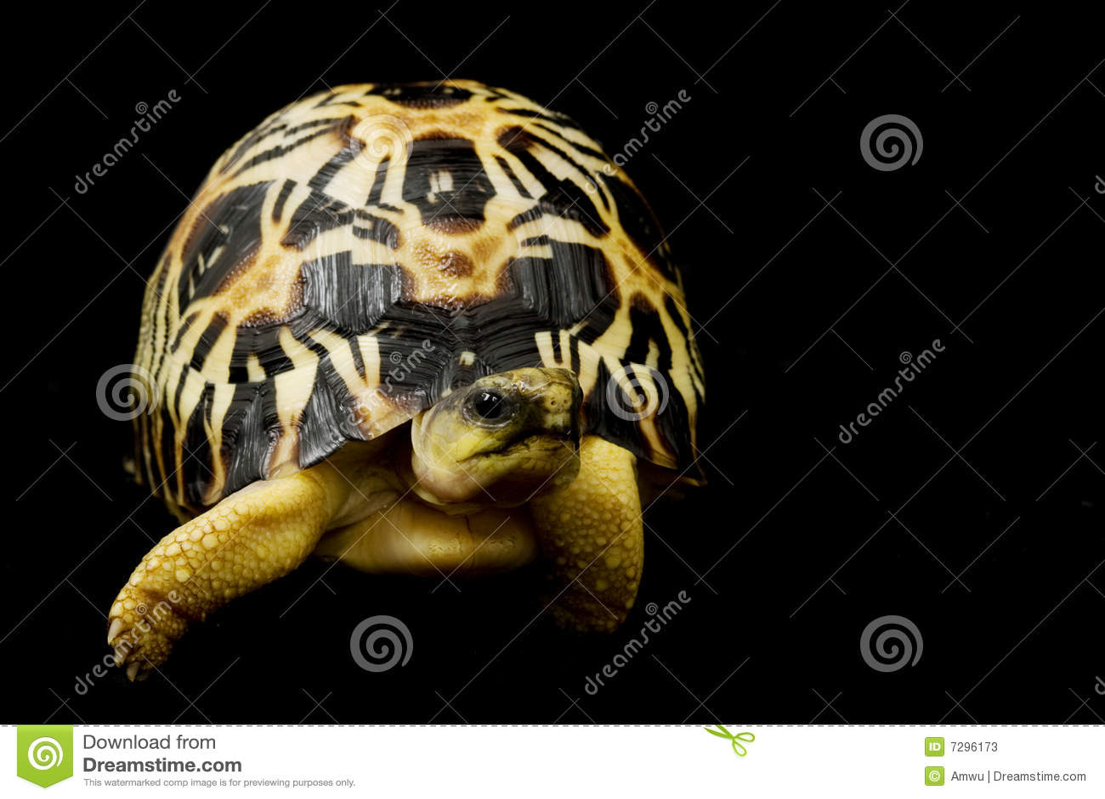 Strålningssköldpadda