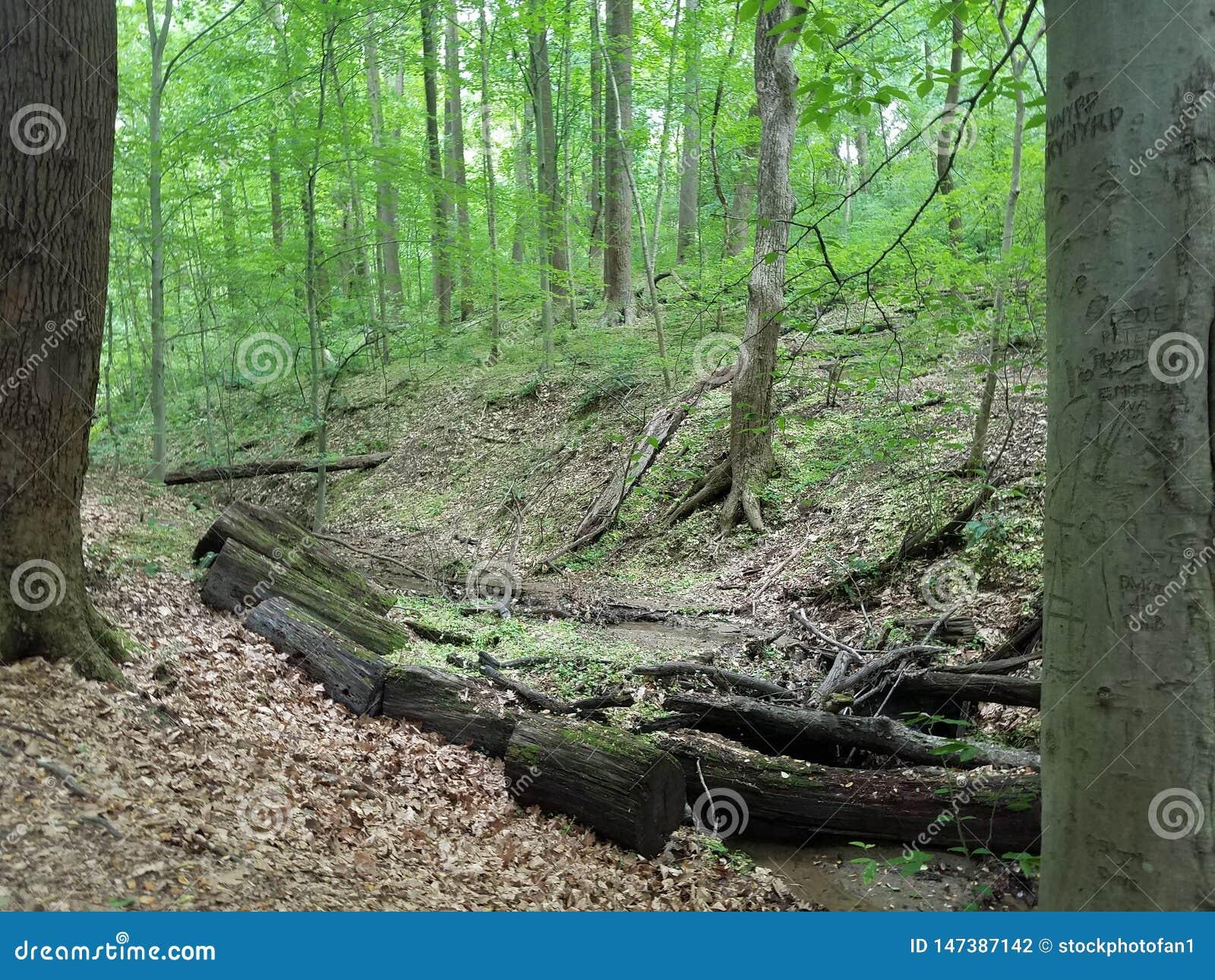 Ström i skog eller trän med trädet med gravyr