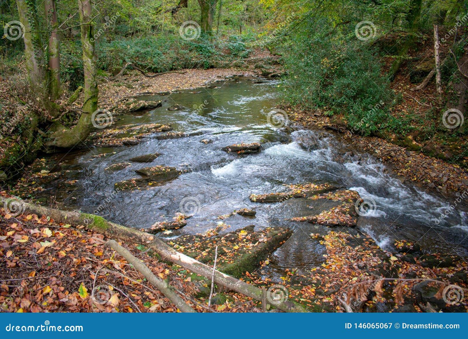 Ström som kör till och med en walesisk skog