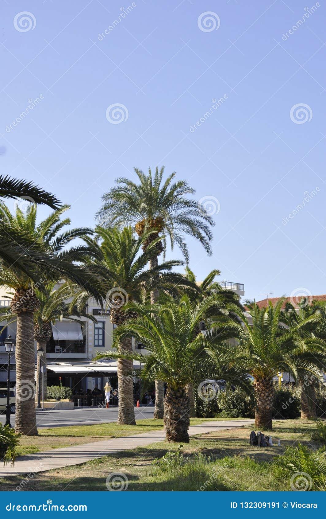 Straße gestaltet mit Palmen von der Rethymno-Stadt von Kreta in Griechenland